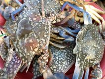 Fresh color crabs at the market in Thailand. Fresh color crabs at the market. Phuket Island Thailand Stock Photography