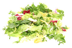 fresh color lettuce Stock Photos