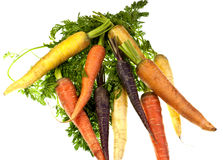 Fresh Colored Carrots royalty free stock image