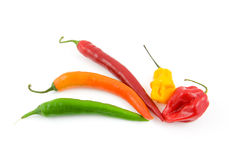 Fresh colored hot peppers Royalty Free Stock Image