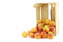 Fresh colorful apricots in a wooden box Royalty Free Stock Image
