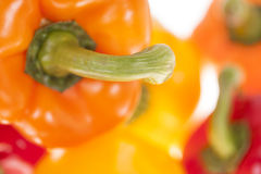 Fresh colorful bell peppers Stock Image