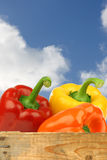 Fresh colorful bell peppers Royalty Free Stock Photos