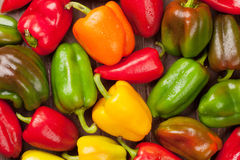 Fresh colorful bell peppers Royalty Free Stock Image