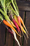Fresh colorful carrots Stock Photos