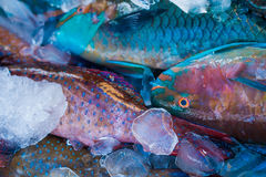 Fresh and colorful fish at the maket Stock Photo