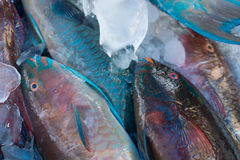 Fresh and colorful fish at the maket Royalty Free Stock Photography