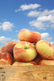 Fresh colorful flat peaches (donut peaches) Stock Photo