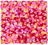 Fresh colorful flower petals Royalty Free Stock Photography