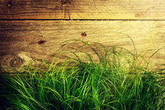 Fresh Colorful Green Grass on Wooden Background with Light Beams Royalty Free Stock Photo