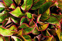 Fresh colorful leaves Stock Photography