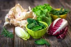 Fresh colorful  lettuce Stock Photos