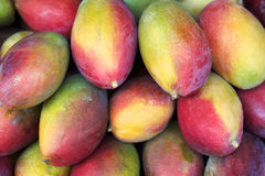 Fresh Colorful Mangoes Tropical Fruit Farmers Market. Fresh colorful tropical mangoes on display at outdoor farmers market in Rio de Janeiro Brazil stock photography