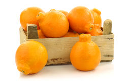 Fresh and colorful  Minneola tangelo fruit Stock Photography
