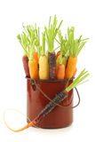 Fresh colorful mix of red,orange and yellow carrots Royalty Free Stock Image