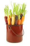 Fresh colorful mix of red,orange and yellow carrots Royalty Free Stock Photography