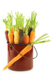Fresh colorful mix of red,orange and yellow carrots Royalty Free Stock Images