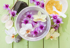 Fresh colorful orchids royalty free stock photo