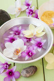 Fresh colorful orchids Royalty Free Stock Images