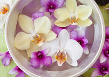 Fresh colorful orchids Royalty Free Stock Photography