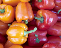 Fresh colorful peppers closeup Stock Image