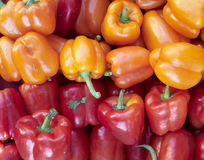Fresh colorful peppers closeup Stock Images