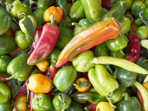 Fresh colorful peppers closeup Royalty Free Stock Photography