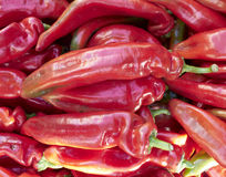 Fresh colorful peppers closeup Stock Photography