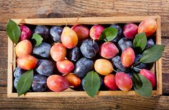 Fresh colorful plums in a wooden box Stock Photos