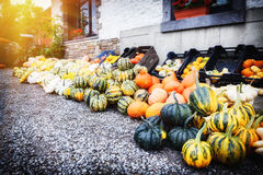 Fresh colorful pumpkins for sale Stock Photos