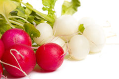 Fresh colorful Radish on a white. Background Stock Photos