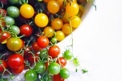 Red, green and yellow cherry tomatoes. Fresh colorful red, green and yellow cherry tomatoes on a branch. Shallow depth of field Royalty Free Stock Photo