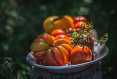 Fresh colorful tomatoes royalty free stock photos