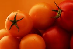 Fresh red and yellow tomatoes royalty free stock photos