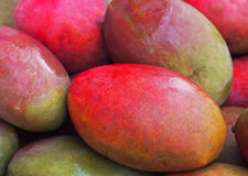 Fresh colorful tropical mangoes on display at outdoor farmers market Royalty Free Stock Images