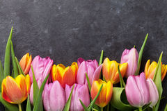 Fresh colorful tulip flowers. On dark stone table. Top view with copy space Royalty Free Stock Images