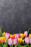 Fresh colorful tulip flowers. On dark stone table. Top view with copy space Stock Images