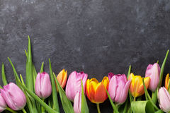 Fresh colorful tulip flowers. On dark stone table. Top view with copy space Stock Image