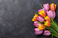 Fresh colorful tulip flowers Royalty Free Stock Photography