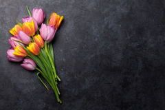 Fresh colorful tulip flowers Stock Photography