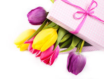 Fresh colorful tulips in a box Royalty Free Stock Image