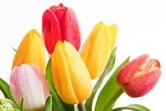 Fresh Colorful Tulips Flowers Isolated On White Stock Image