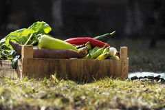 Fresh and colorful vegetables in the box in the garden close up. Stock Photo