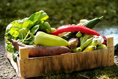 Fresh and colorful vegetables in the box in the garden close up. Healthy lifestyle concept with home grown bio vegetables. In a wooden hutch Royalty Free Stock Image