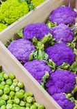 Fresh colorful vegetables on the counter of the store: purple cauliflower, Brussels sprouts.  Royalty Free Stock Images