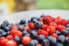 Fresh colourful berries. Wild strawberries and blueberries close-up Royalty Free Stock Photography