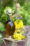 Fresh colza oil Stock Images