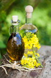 Fresh colza oil Royalty Free Stock Photography