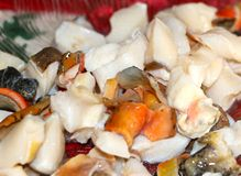 Fresh Conch Ceviche Stock Images