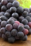 Fresh concord  grapes Royalty Free Stock Photo